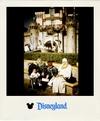 Disneylandpola2tag