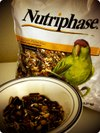 Roundnutriphase