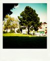 Treepola