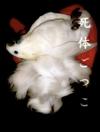 Shitaigokko