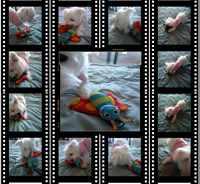 Film4x4centerfinal400