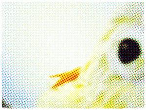Eyelightmergeframe